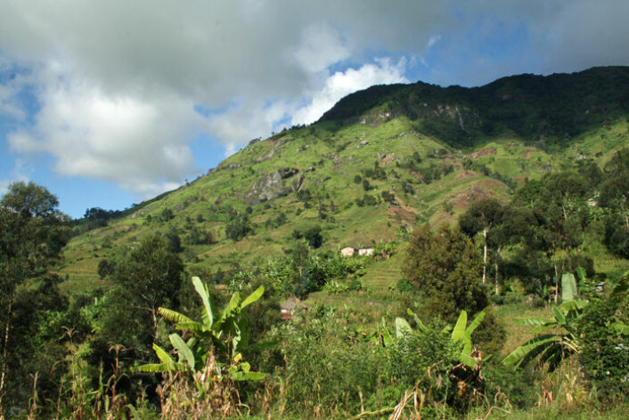 I Tanzania er det frodig selv 1500 meter over havet. (Foto: Asle Rønning)