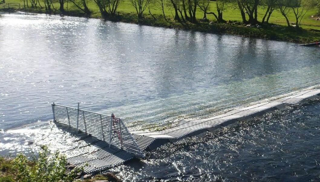 Fiskefella i Etne. Ø. Skaala/Havforskningsinstituttet