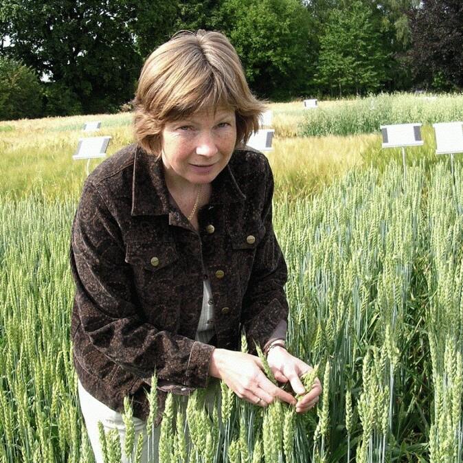 Professor Anne Kjersti Uhlen forsker på nye muligheter for norsk landbruk.