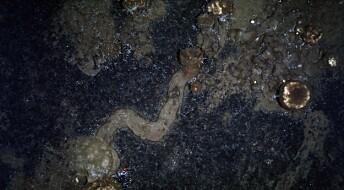 Mystiske stier på havbunnen viser at svampene beveger seg