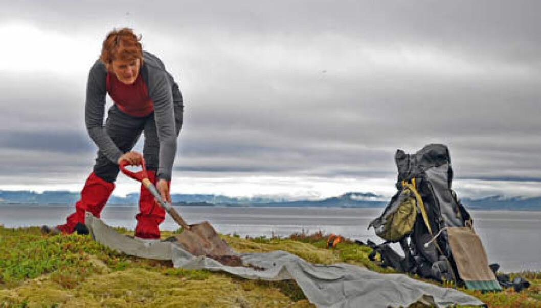 Belinda Flem spar opp torv og gjør klar til å ta en ny jordprøve på kysten av Hamarøy. Gudmund Løvø/NGU