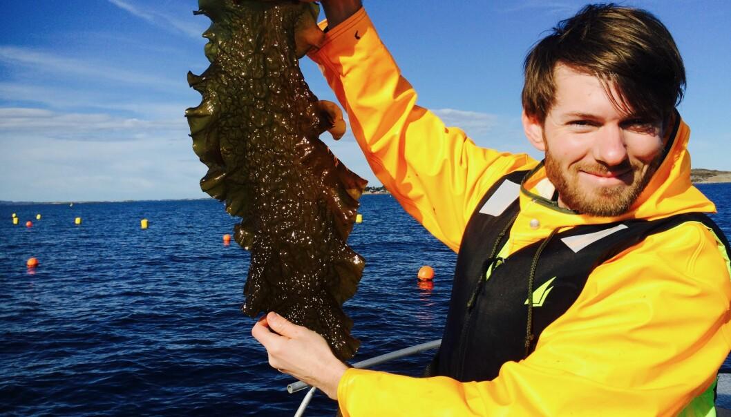 Daglig leder Jon Funderud i det Trondheimsbaserte firmaet Seaweed Solutions viser frem taren som de eksporterer til matprodusenter i Europa.