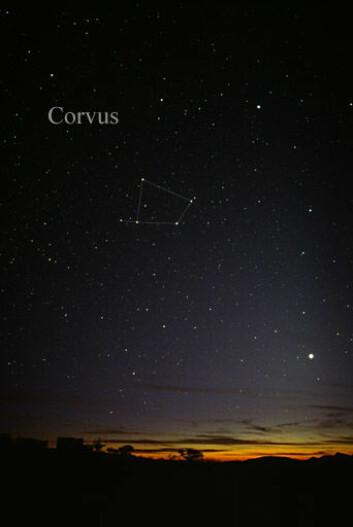 LHS 2520, eller Rao som den heter i tegneserien, befinner seg i stjernebildet Ravnen, Corvus på engelsk. (Foto: Till Credner/Wikimedia Creative Commons)