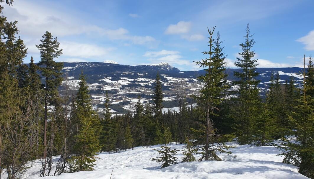 Snø og skog har ulik evne til å reflektere sollys.