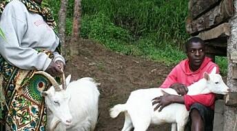 Norske melkegeiter har blitt gull verdt i Tanzania