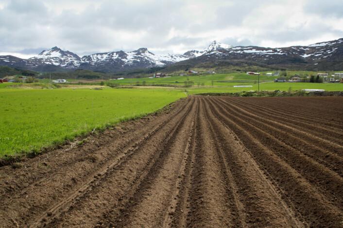 Ny kartlegging av jordsmonnet i Vestvågøy kommune viser at en stor andel av arealene har svært god jordkvalitet. Området på bildet egner seg for eksempel svært godt til potetproduksjon. (Foto: Åge Nyborg / Skog og landskap)
