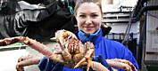 Hvordan avlive krabber så skånsomt som mulig?
