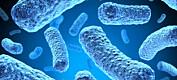 Forskere vet nå mer om hvordan antibiotikaresistens utvikler seg i Norge