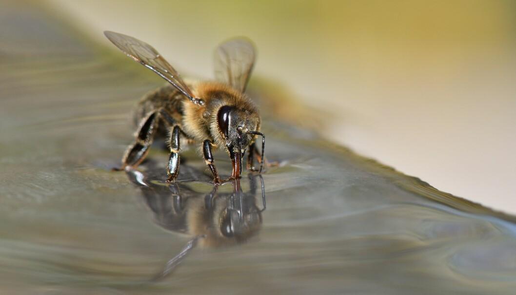 Bier lærte å koble lukten av en positiv koronaprøve med mat.