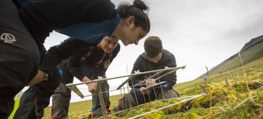 Forskere roper varsko for den arktiske tundraen