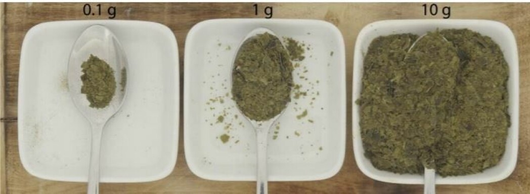 Så mye sukkertare kan du spise for å dekke maks dagsbehov av jod, illustrert med en teskje. Fra venstre ser du tørket tare, så ubehandlet, rå tare og blansjert tare helt til høyre.
