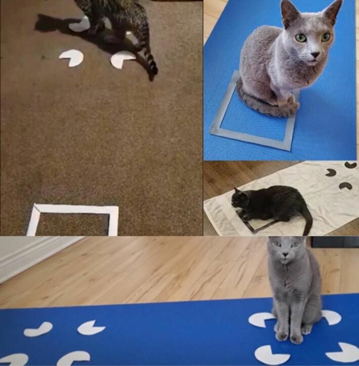 Bare én katt, Totoro, valgte figuren øverst til venstre én gang.