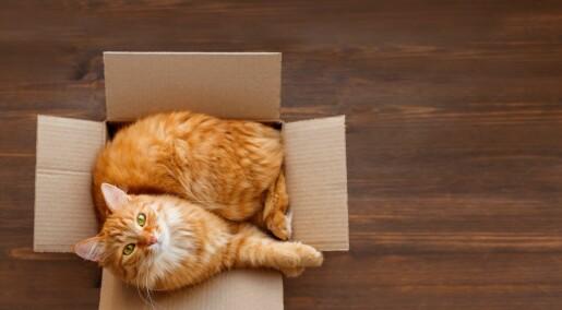 Katter liker firkanter, ikke bare bokser
