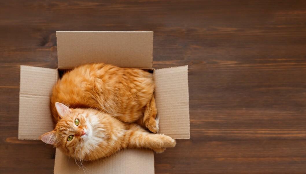 Har du katt, har du kanskje lagt merke til at den gjør dette.