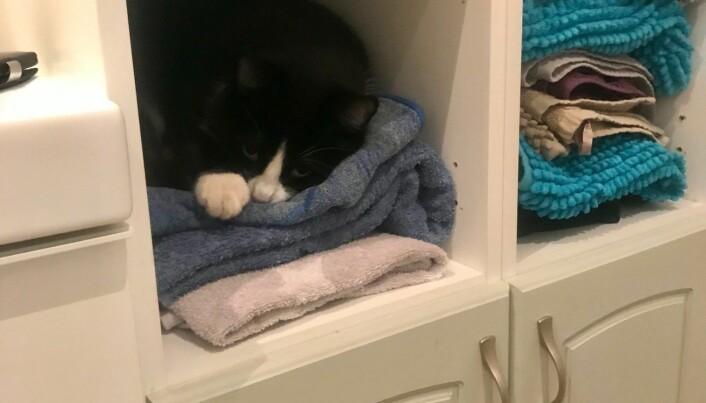Katten Chips slapper gjerne av i esker, men også i håndklehylla.