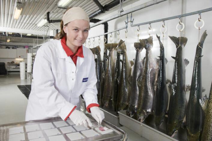 Ingrid Sanna hos Aqua Gen tar prøver av stamfisk. (Foto: Aqua Gen)