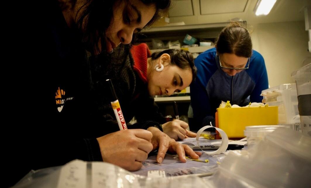 Medlemmer av bentos-teamet merker og forbereder prøver før de blir skitne