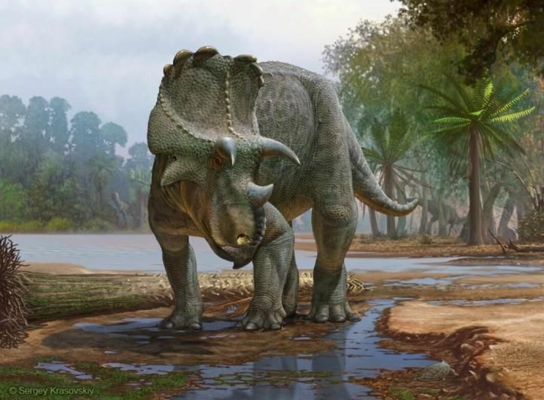 Denne dinosauren har nylig fått et eget navn av forskere. Den heter Menefeeceratops sealeyi, og er den eldste som er oppdaget i en dinosaur-familie som heter Ceratopsidae.