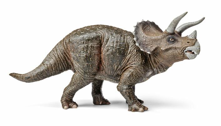 """<span class="""" italic"""" data-lab-italic_desktop=""""italic"""">Triceratops</span> hadde også tre horn og nebb, men kunne antakelig bli dobbelt så stor som <span class="""" italic"""" data-lab-italic_desktop=""""italic"""">Menefeeceratops</span>."""
