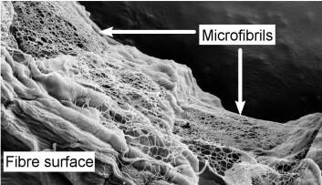 Et nettverk av mikrofibriller legger seg utenpå fiberveggen. (Foto: Gary Chinga-Carrasco)