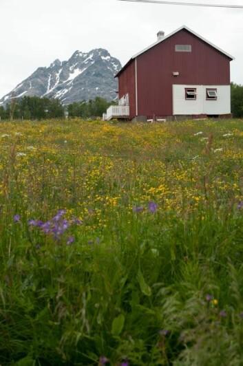 Lyngen er kjent for sin flotte natur. Nå kartlegges også utmarka i kommunen med tanke på sauebeite. (Foto: Skog & Landskap)
