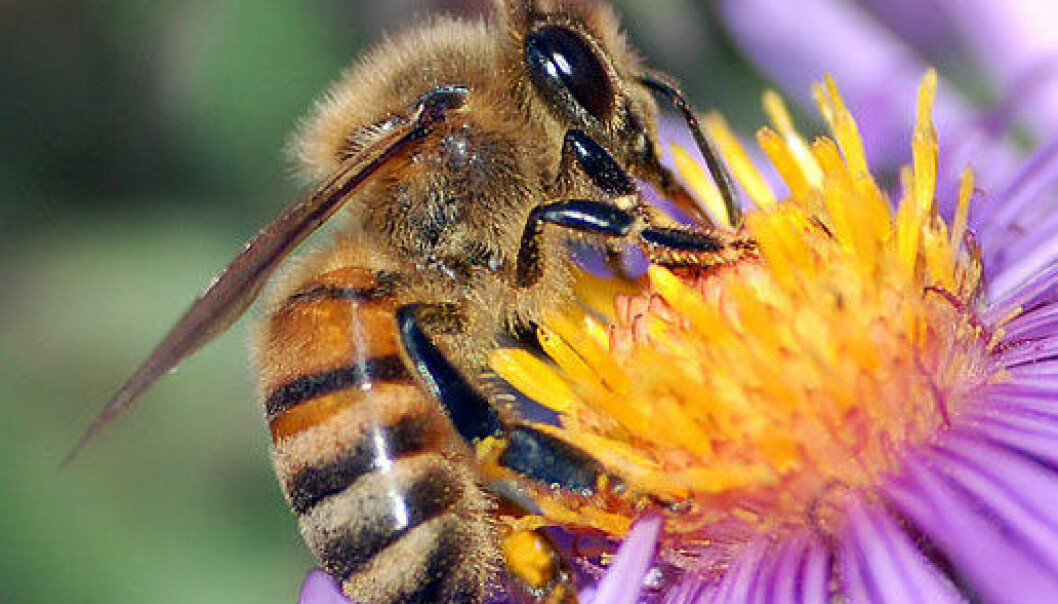 "<a href=""http://commons.wikimedia.org/wiki/File:European_honey_bee_extracts_nectar.jpg"">John Severns</a>"
