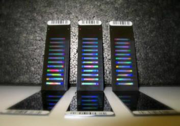 DNA-chipen brukes til å teste genetiske markører. (Foto: Matthew Kent i CIGENE)