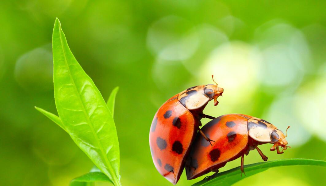Innavl er mer vanlig enn uvanlig i dyreriket, ifølge forskere fra Stockholm University.