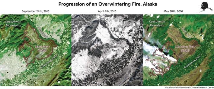 Her viser forskerne hvordan fenomenet ser ut. Til venstre ser du et rødt område, som var restene av en stor skogbrann i 2015. I midten er det samme området om vinteren og snødekket. Til høyre har brannen gjenoppstått på våren 2016 ved siden av den gamle, og du kan se de hvite røyksøylene fra brannen.