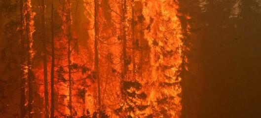 Skogbranner kan fortsette i det skjulte under snøen om vinteren