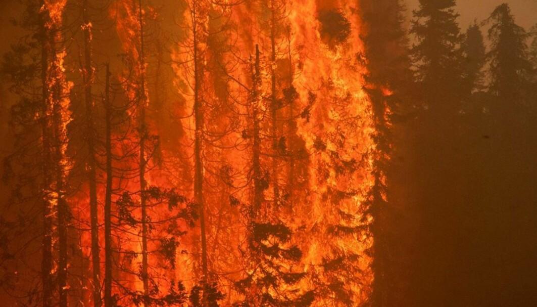 Illustrasjonsbilde: Dette er en skogbrann kalt Sockeye Fire i 2015, som herjet i deler av Alaska. Det er uvisst hvordan akkurat denne brannen startet.