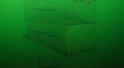 Tar torsken på grønt lys