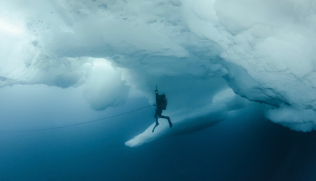 En dykker med sugepumpe under isen en plass i det dype blå arktiske havet