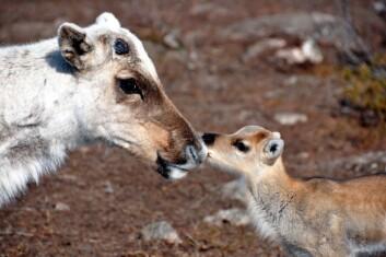For mange dyr kan en tidligere vår bli en forandring til det bedre. (Foto: Madeleine Lagergren)