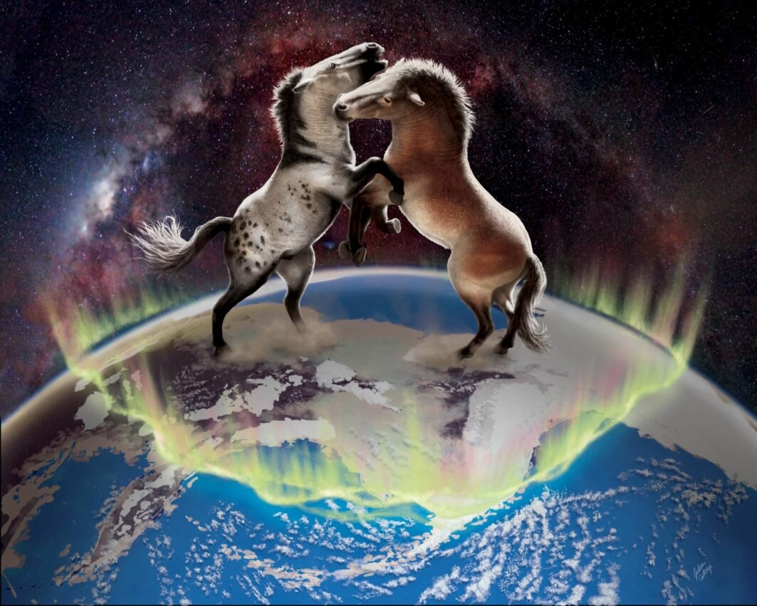 Ancient horses crossed over the Bering Land Bridge in both directions between North America and Asia multiple times during the Pleistocene.