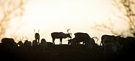 Nye veier og bygg stenger for de ville dyrene