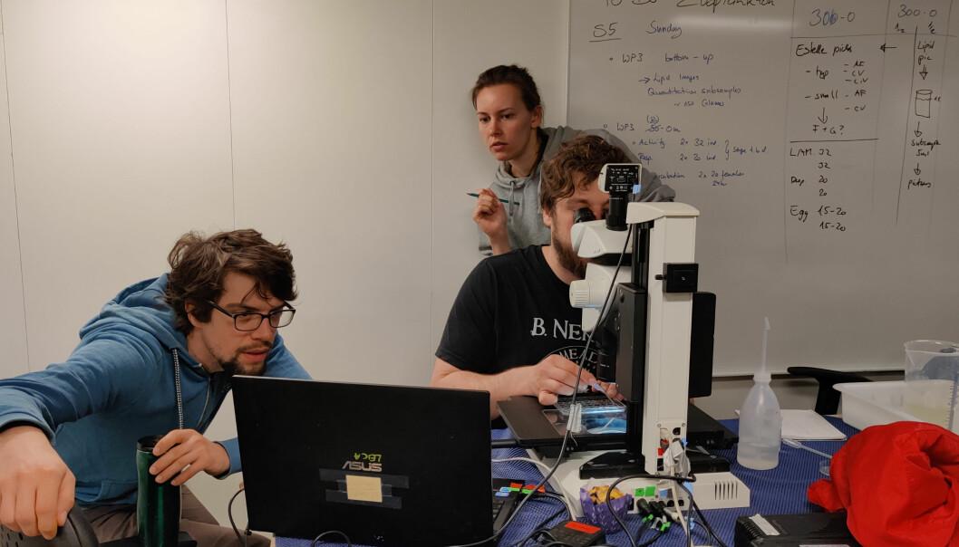 Første data av en zooplankton i en prøve tatt sør for polarfronten er i boks.