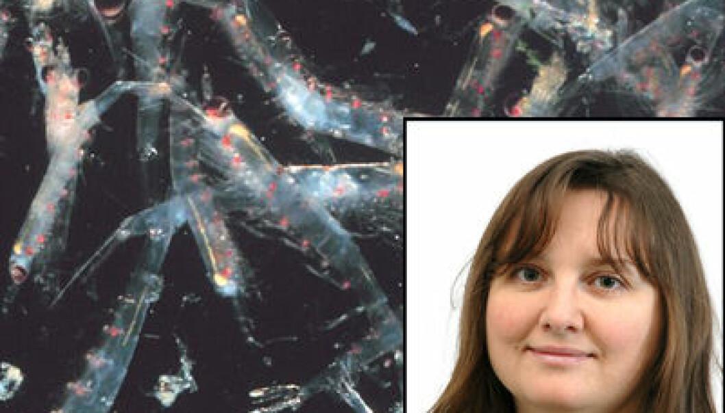 Victoria Bohne (Foto: UiB) på en bakgrunn av krill (Foto: Jamie Hall/Wikipedia)