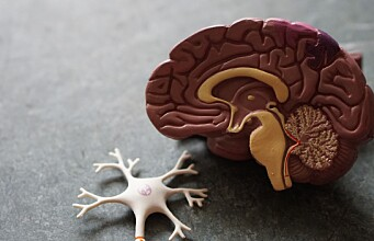 New research sheds light on the brain's GPS system