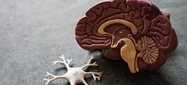 Er hjernebølger en del av hjernens GPS-system?