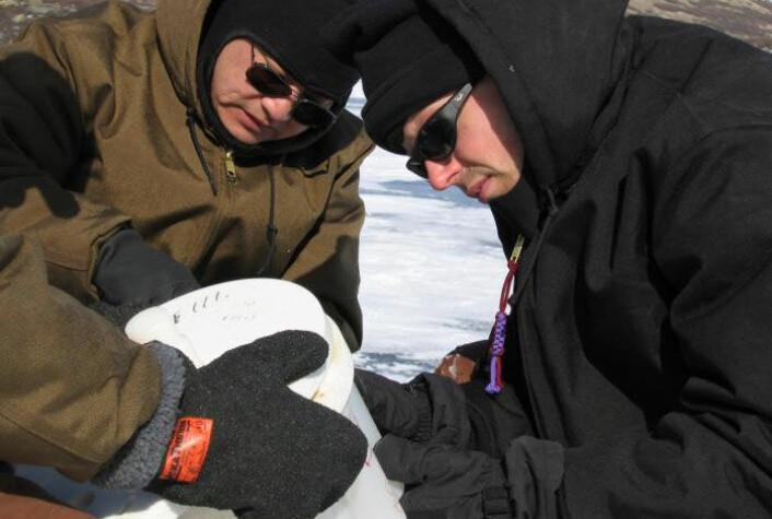 Isen skjuler 5.600 års klimahistorie. Forskerne William D'Andrea (t.h) og Yongsong Huang med en iskjerne fra en sjø nær Kangerlassuaq på Grønland. (Foto: William D'Andrea/Brown University)