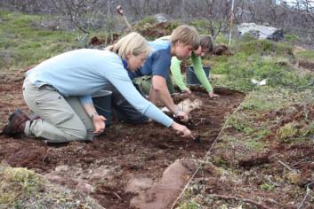 Studentene graver i Øst-Finnmarks fortid. (Foto: Jan Ingolf Kleppe)