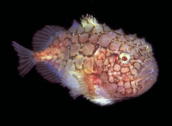 """""""Det finnes mye i havet vi vet for lite om. Marbank samler og registrerer biologisk materiale, Marbio analyserer det, for å finne interessante stoffer. Foto: Bjørn Gulliksen."""""""