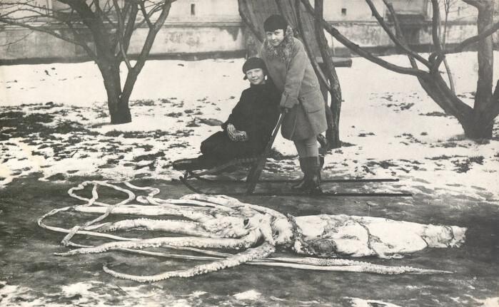 Denne kjempeblekkspruten ble funnet i fjæra ved Ranheim i 1928.