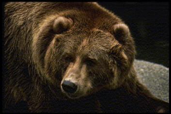 """""""I områder med bjørn og ulv har man satt inn tunge tiltak."""""""
