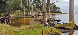 Døde trær slipper også ut klimagasser