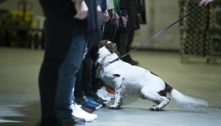 Hunder kan lukte narkotikarester. Derfor jobber hunder med dette, for eksempel på flyplasser.