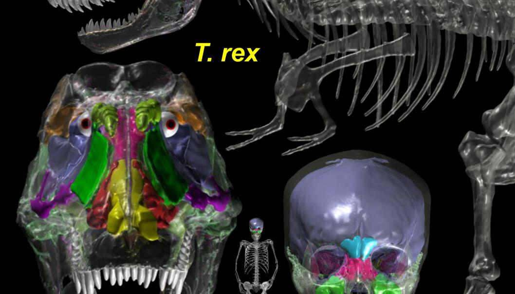 T. rex luftig under lokket