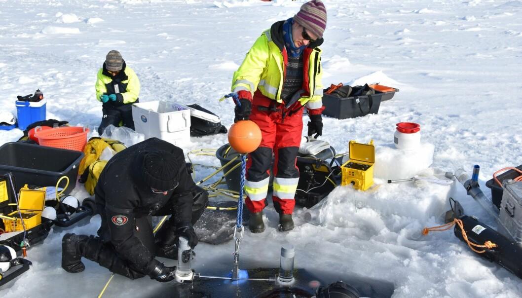 Dykkere Peter Leopold og Mikko Vihtakari henter ut en sedimentfelle fra undersiden av isen for Yasemin Bodur.