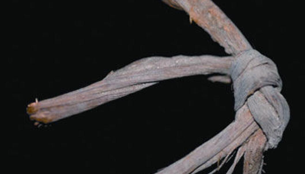 Utsnitt av bilde av tauverk fra Guitarrero-hulen i Peru. Steinalderfunn. (Foto: Edward A. Jolie og Phil R. Geib)